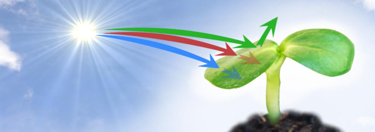 Oświetlenie Roślin Ledami Reset Mikro Sklep Reset Mikro